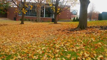 Leaves decorating the grass with the Architecture building in the background